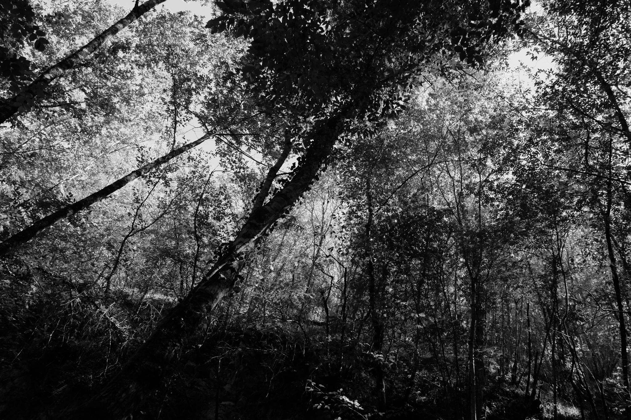 árboles río